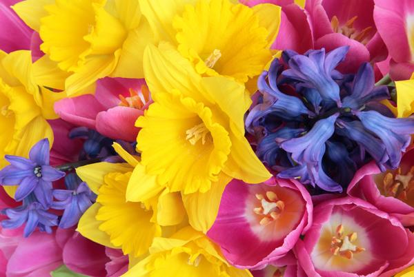 Flowers For A Spring Wedding Ottawa Wedding Magazine